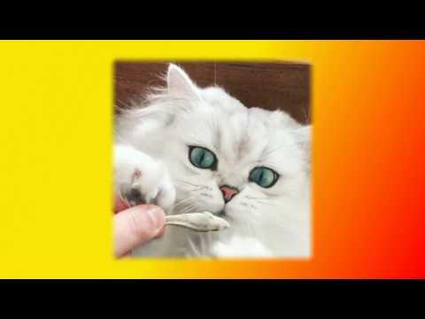 Забавные кошки Смешное видео про кошек Прикольное про кошек Создай себе хорошее настроение