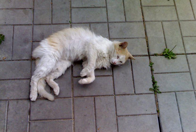 Как кот спас котёнка, привел…