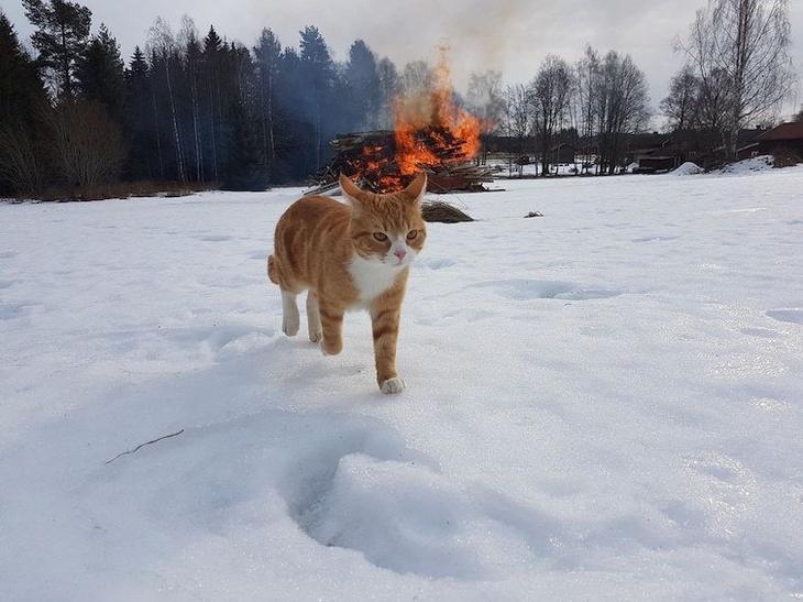 8. Кот-поджигатель Забавные фото, забавные фотки, неожиданные, смешные фото, удивительные фото