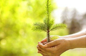 Хвойное растение в руках