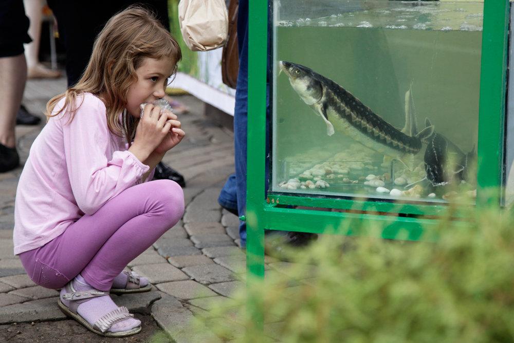 Как изменился рыбный рацион у россиян