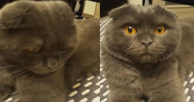 Кот провинился. Взгляните на его реакцию после слов хозяйки «Басик едет к бабушке»!