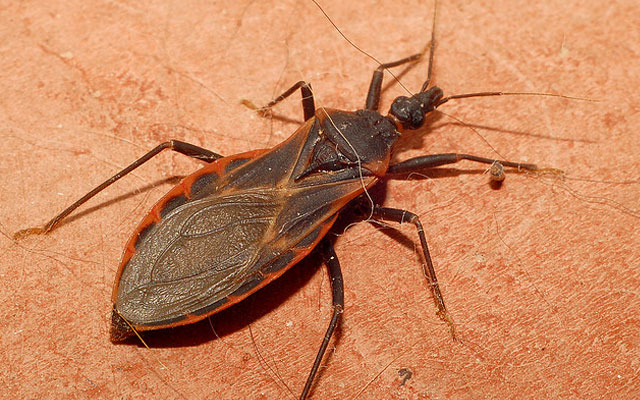 10 смертельно опасных насекомых планеты