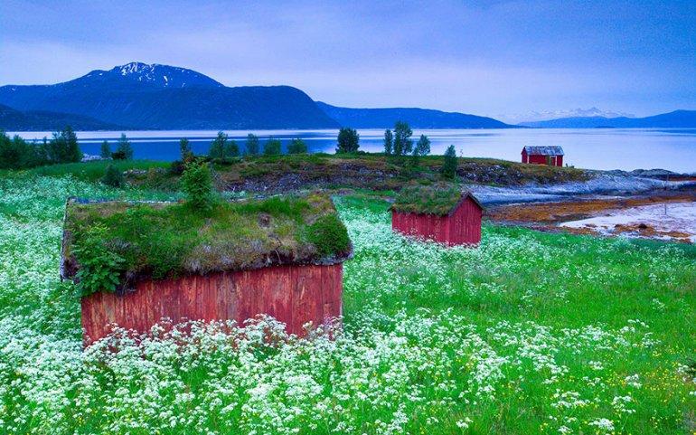Сказочные скандинавские крыши, покрытые зеленью
