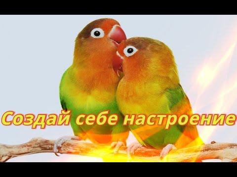 Смешные попугаи.Видео.Для детей.Забавные попугаи.Создай себе хорошее настроение