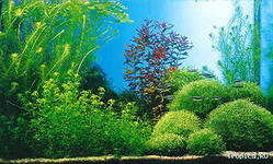 Как заполнить аквариум шаг за шагом