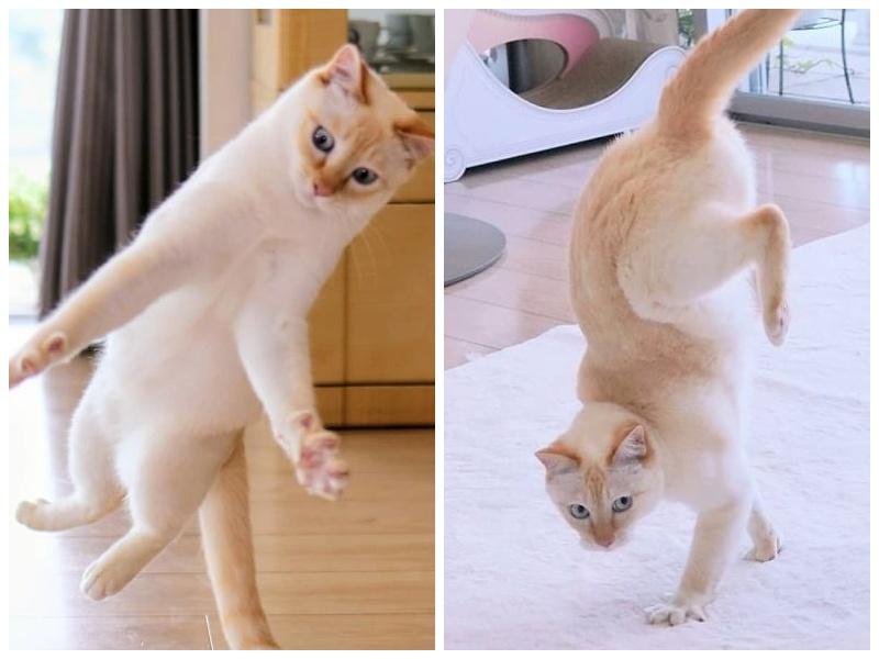 Этот кот из Японии танцует намного круче, чем вы, и вот 25 доказательств
