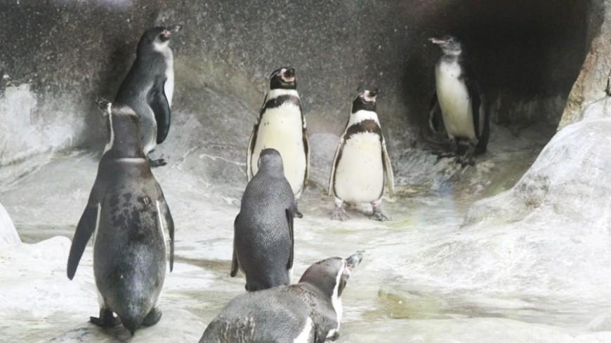 В Антарктиде нашли скрывавшуюся три тысячи лет популяцию пингвинов