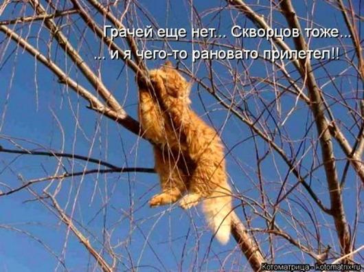 1489789916_svezhaya-kotomatrica-1
