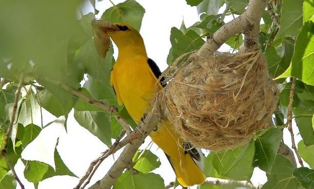 Ученые выяснили, о чём птицы поют яйцам