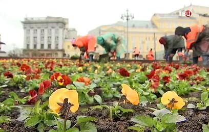 В Москве высадят миллионы цветов