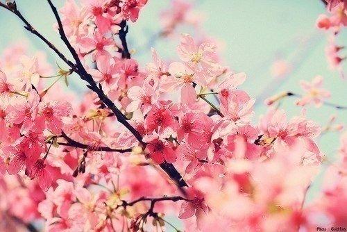 Весна !