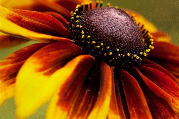 Неуничтожаемые цветы для ленивого сада