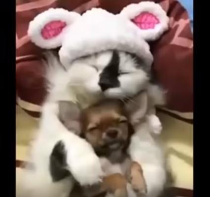 Забавные, милые и странные коты