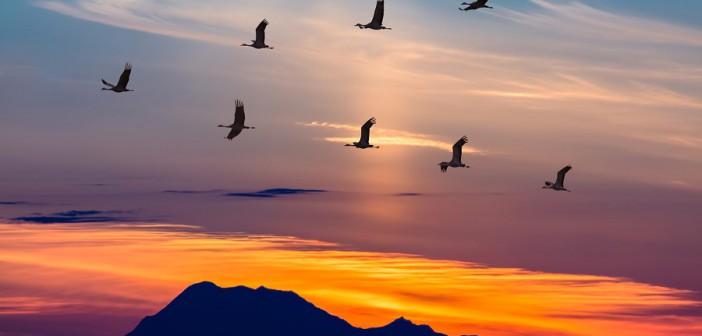 Может ли сезонная миграция птиц и животных способствовать распространению коронавируса