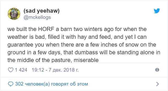 Танго — самый странный и придурковатый конь, одолевший своей глупостью Твиттер