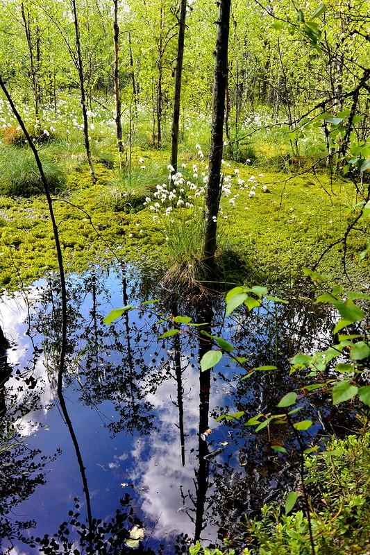Прекрасное болото, не будь к…
