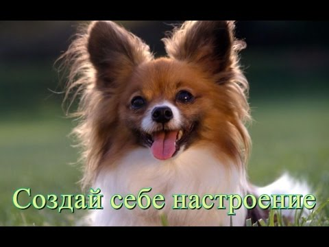 Позитив Смешное видео Приколы о животных Видео для детей Создай себе хорошее настроение