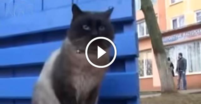 Кот верный как Хатико. Невозможно сдержать слезы...