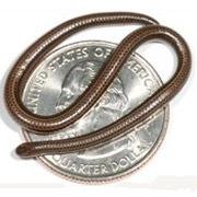 Cамая маленькая змея в мире
