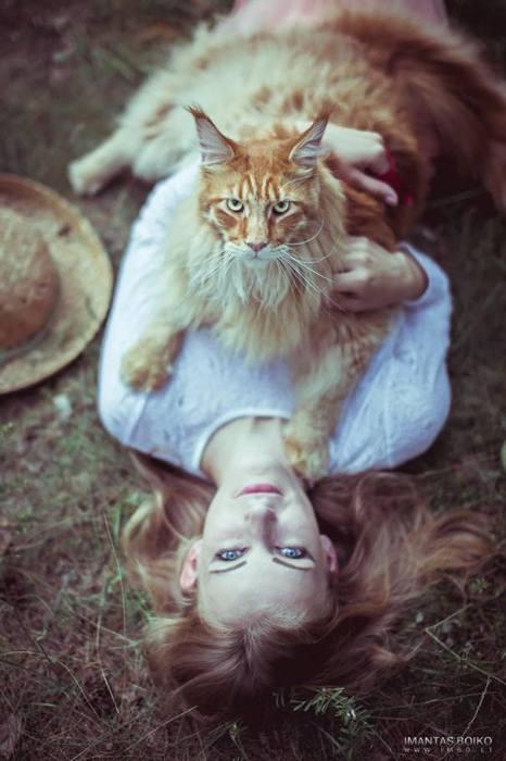 Норвежский лесной кот. | Фото: ofpof.com