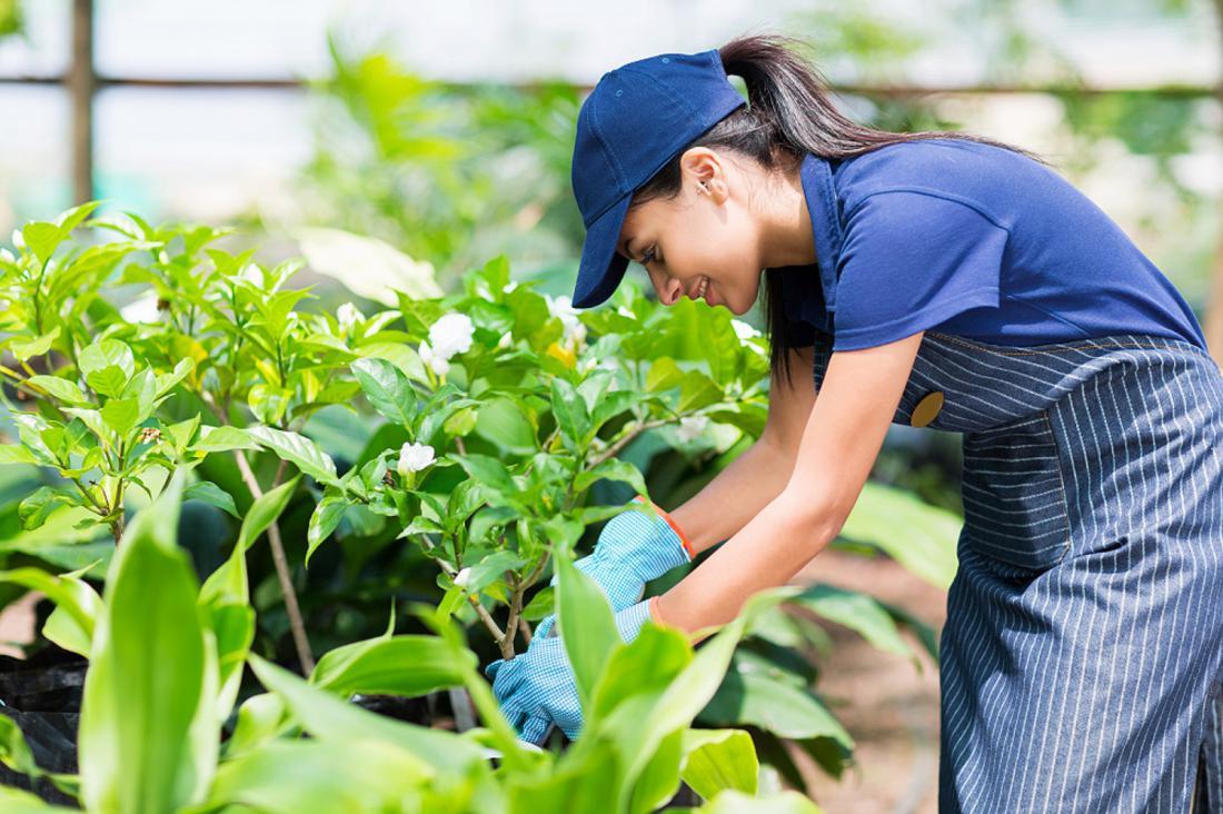 Почему работа в саду делает вас здоровее и счастливее?