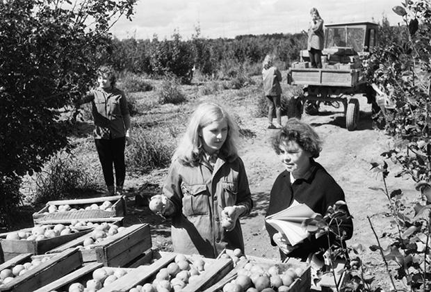 Откуда бралось «советское изобилие», в которое россияне верят до сих пор