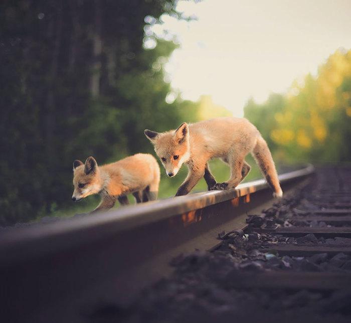 Чтобы так близко подобраться к животным, надо иметь невероятное доверие с их стороны.