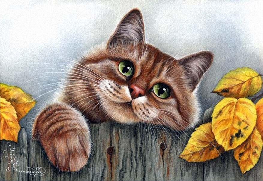 Суета вокруг кота