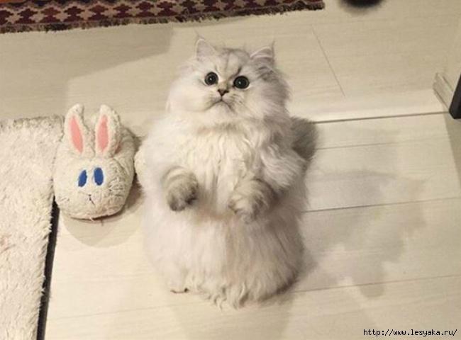 ТЕРЕМОК. Забавные коты