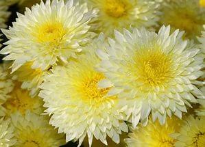 Цветы, которые цветут в августе
