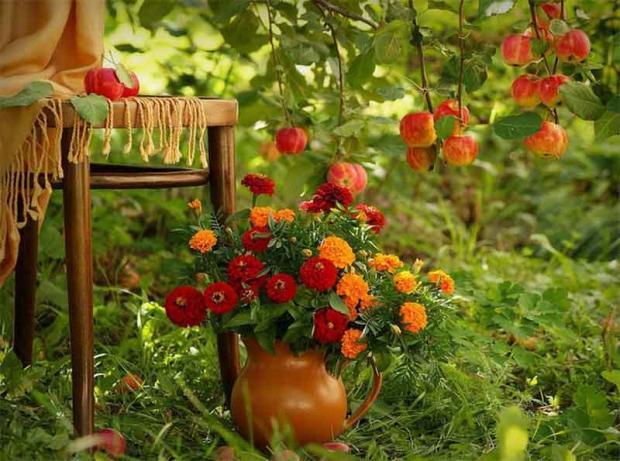 Советы садоводам и огородникам: что нужно успеть сделать до конца сентября