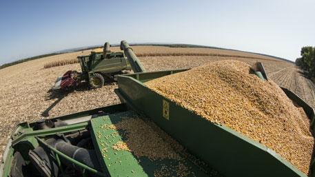 Турция понесет ущерб без поставок зерна из РФ - Минэкономразвития