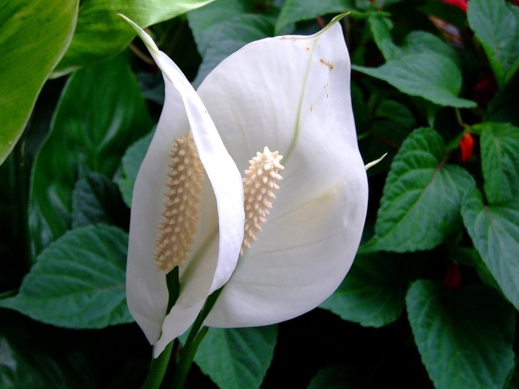 10 самых счастливых комнатных растений
