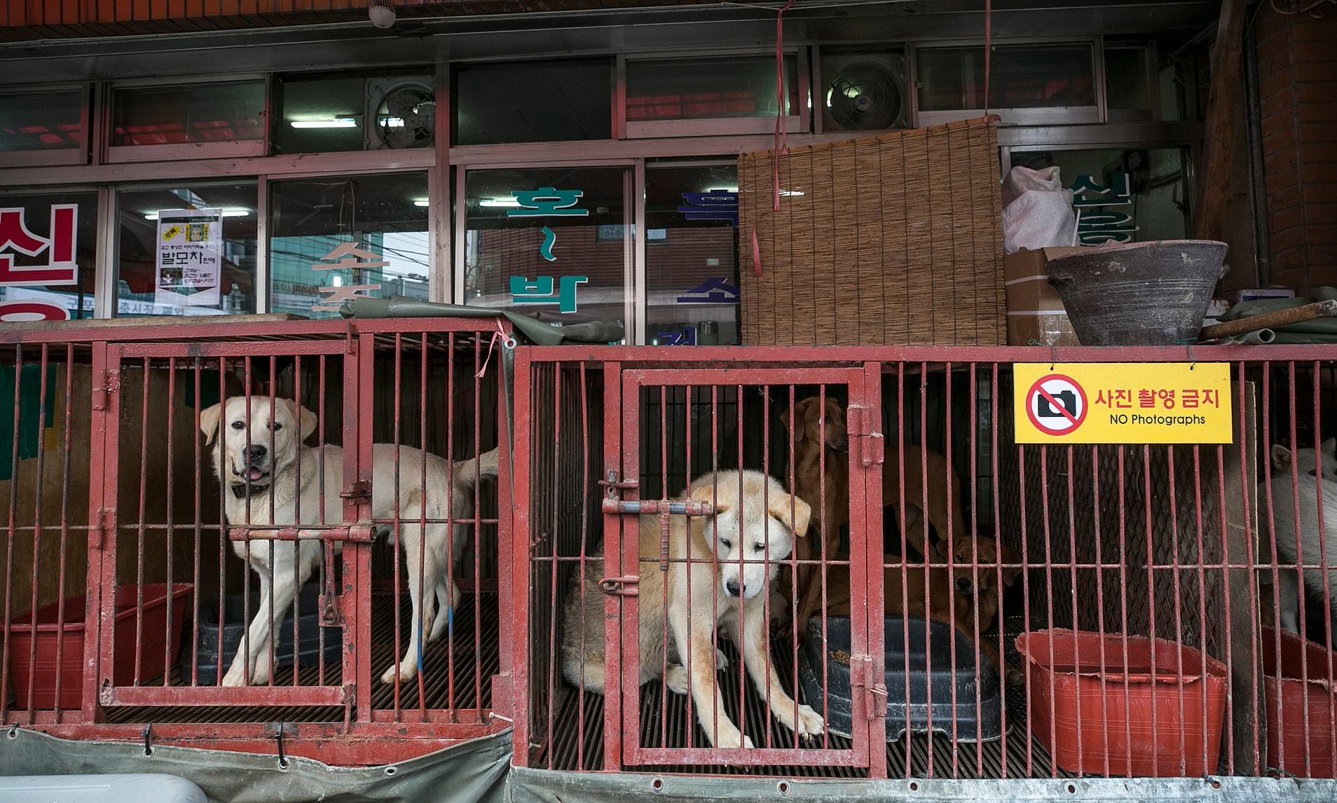 В Южной Корее едят собак