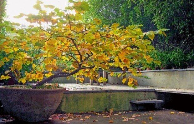 Как подготовить сад к зиме: 10 советов профи