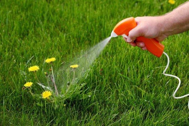 Как избавиться от сорняков р…