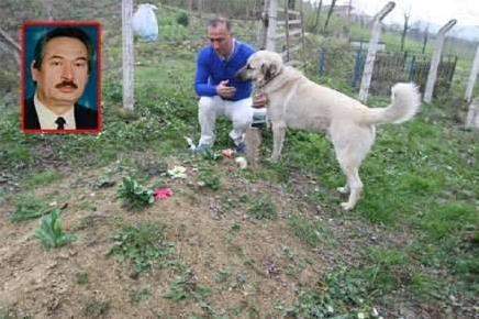 Когда сын пришел навестить могилу отца, он увидел там собаку. Невероятно трогательная сцена!