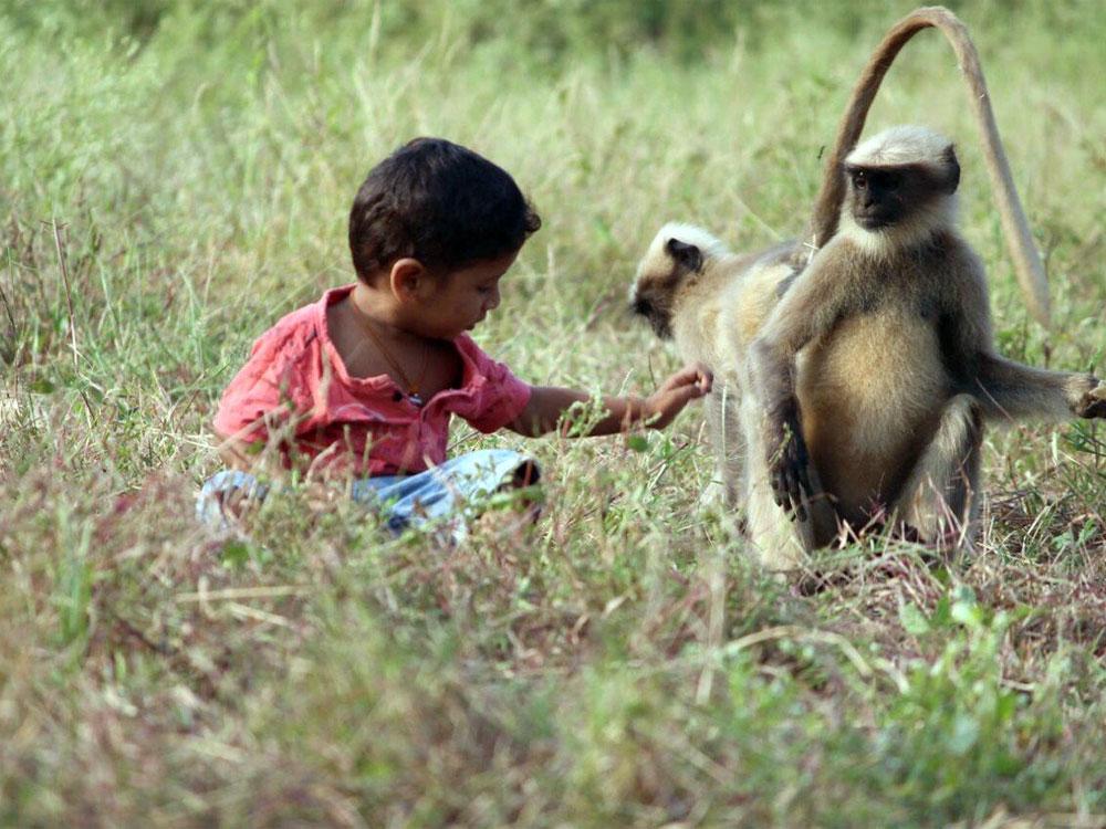 Обезьяний киднеппинг: мартышка увела ребенка и отказалась его возвращать. Видео