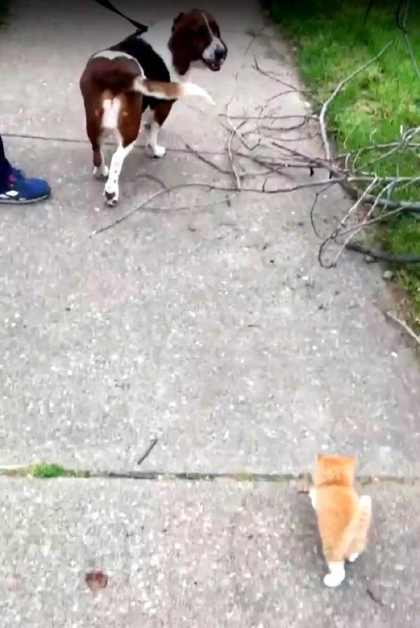 Котенок бежал по пятам за собакой и ее хозяином