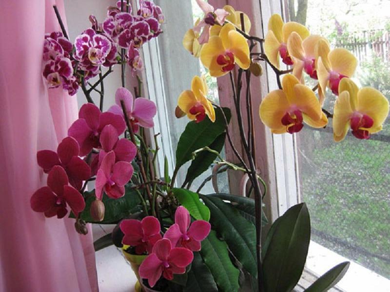 Секреты правильного ухода за орхидеями