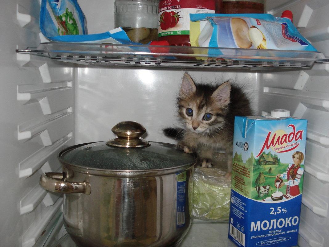 Как найти котенка, потерявше…