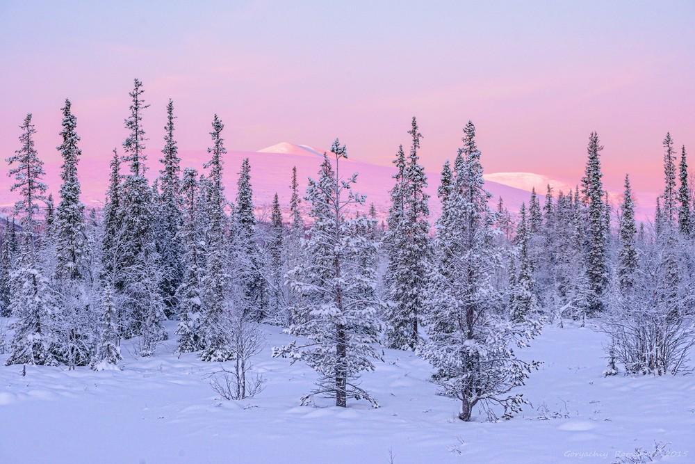 Холодные зимние пейзажи на снимках Романа Горячего