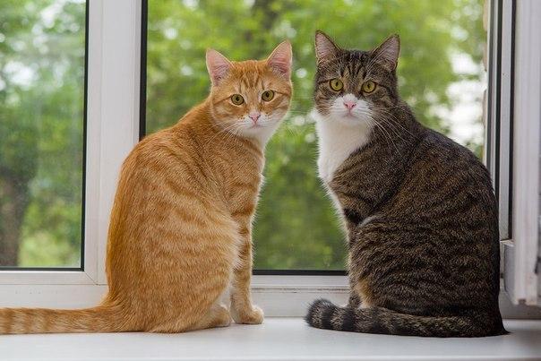 Если вы завели вторую кошку... Как познакомить и подружить кошек. Самые сильные и злые собаки в мире