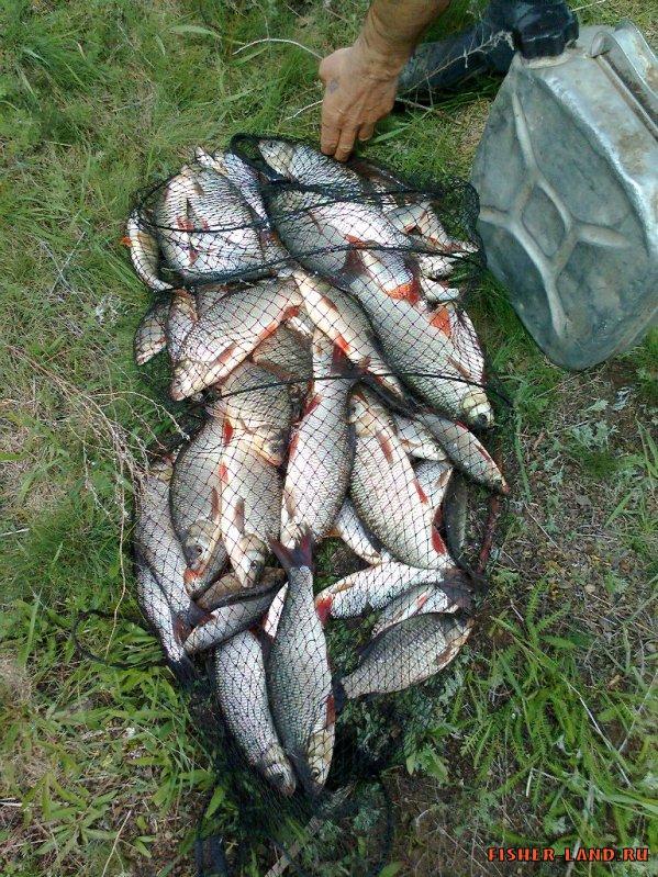 рыбалка на ириклинском водохранилище в октябре