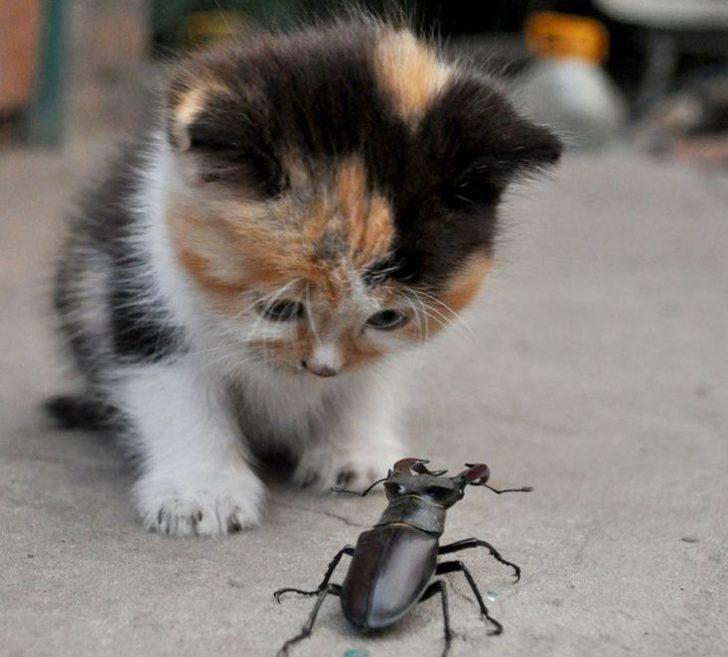 Маленький котенок спасал застрявшего жука, сам не смог, позвал на помощь