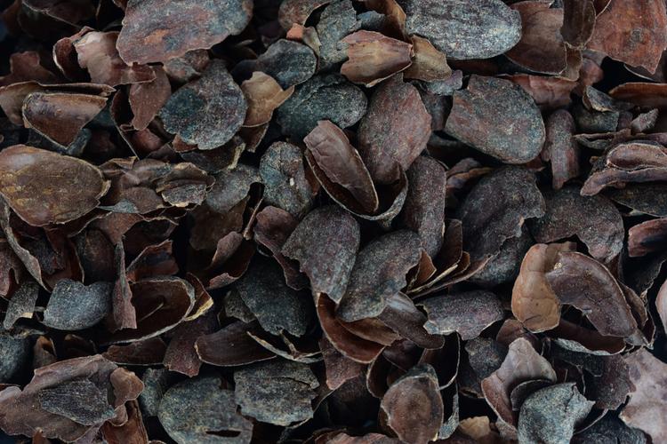 Новое в профилактике диабета: шелуха какао-бобов