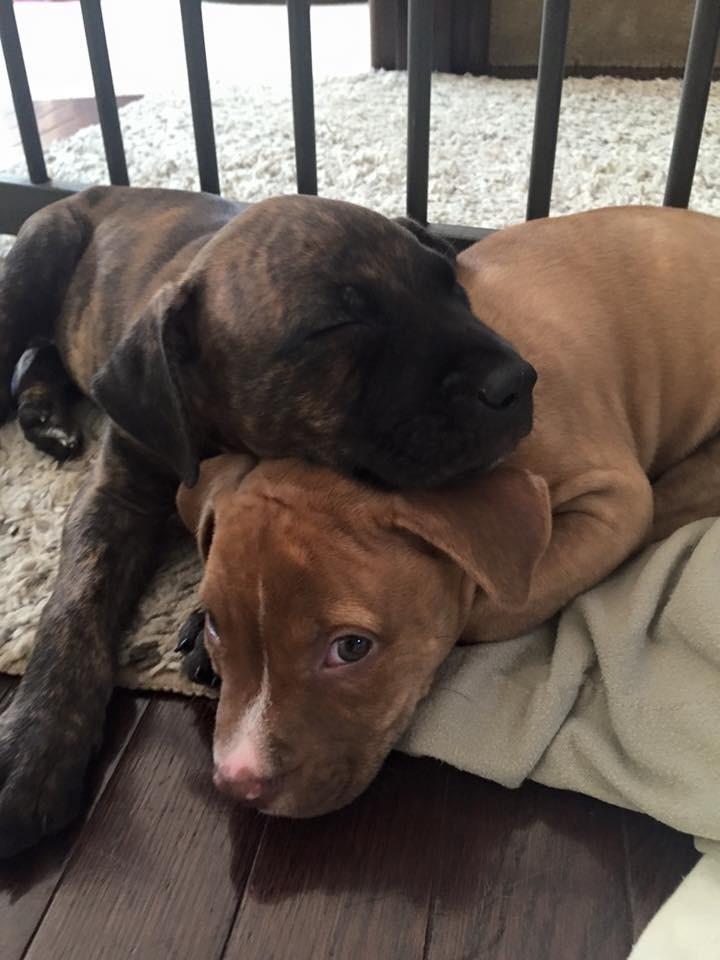 История о том, как брошенные щенки стали лучшими друзьями