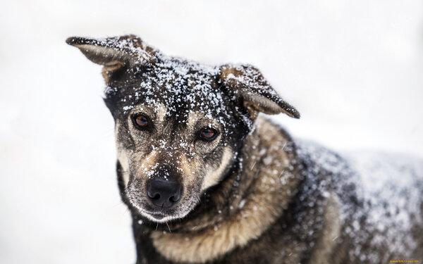 Мужчина не остался равнодушен бездомному псу, а спустя время судьба преподнесла ему подарок