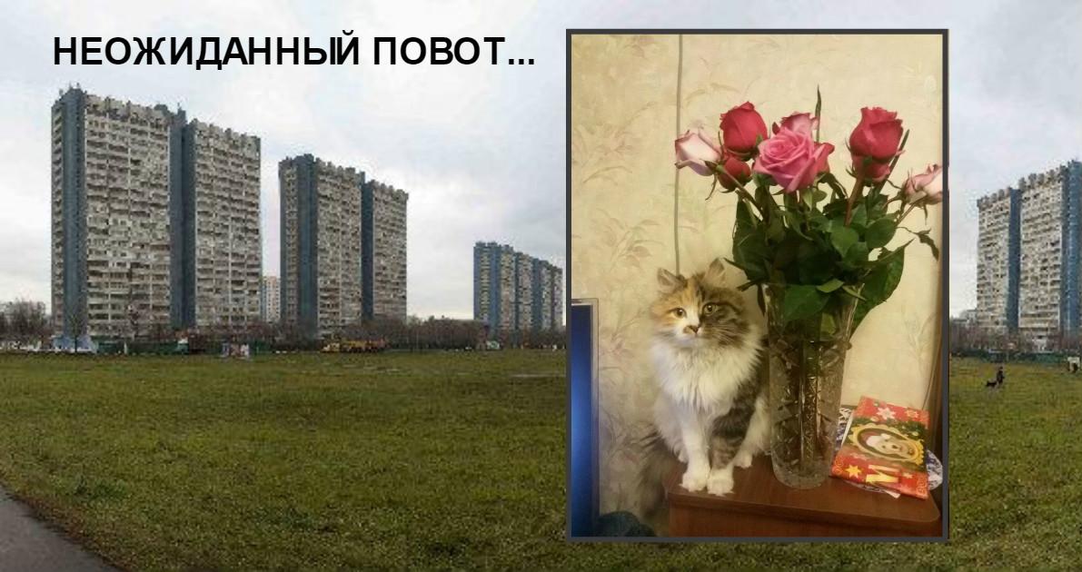 """""""Ушиб тела – не пустяк, но душа важнее!"""" Битая кошка ловила мышей на пустыре и не рассчитывала на везение"""
